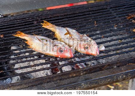 Two Red Snappers On The Bbq In Martinique