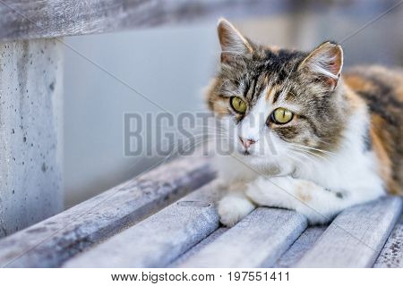 Homeless three-color cat lies on a bench on the beach and looks