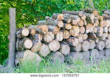 Wood Pieces In Nature