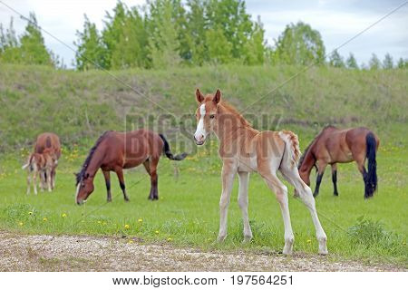 The Little Foal In The Meadow