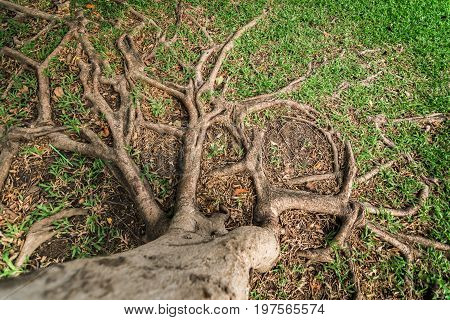 Branches of tree roots on the ground.