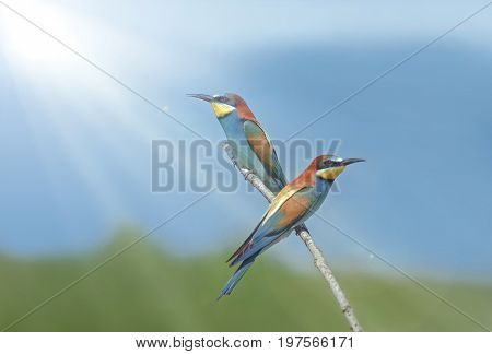 Beautiful Colorful Birds Sitting On A Tree Branch, Isolated Background