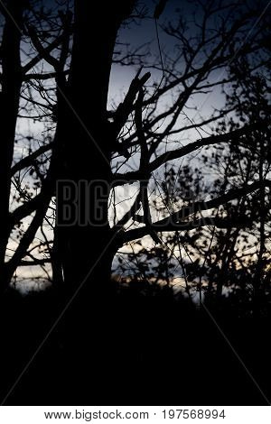 Silhouette Of Old Wood