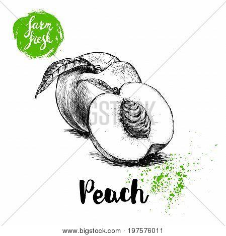 Hand drawn sketch style peach fruits composition. Farm fresh eco food vector illustration. Ripe peach peach slice.