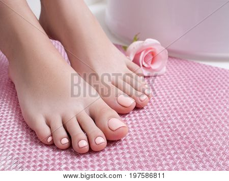 Pink perfect pedicure on feet. Female feet on pink background side view with free space. Result of spa salon procedure