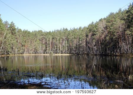 View of the lake in the forest