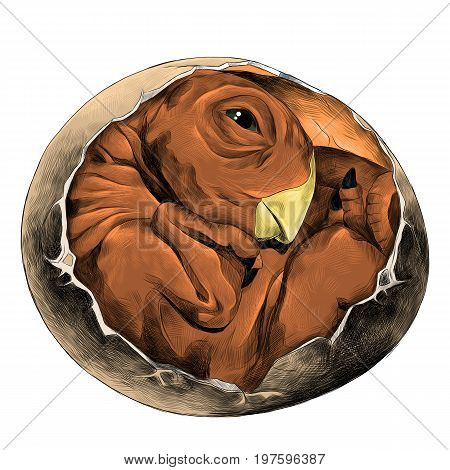 dinosaur egg hatched rolled into a ball newborn sketch vector graphics color picture