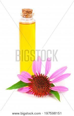 Essential oil of Echinacea purpurea isolated on white background.