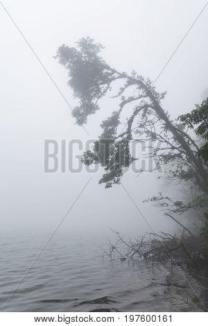 Tree branch at foggy volcano lake La Fortuna Costa Rica