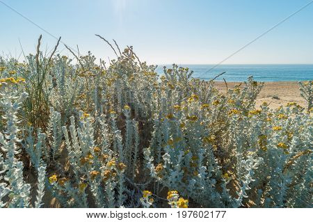 View of the beach. Plants growing on the dune. Sea and blue sky. Nice summer landscape.