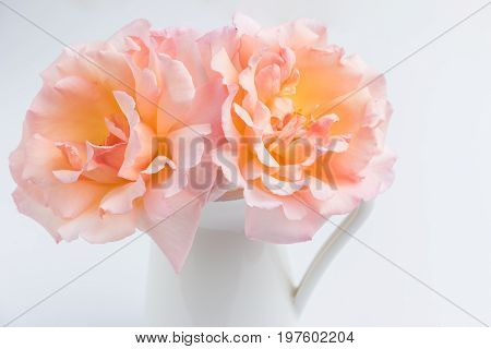 Fresh bunch of pink roses flowers in the jar. Pastel floral wallpaper background from flower petals. Trendy color. Bloom love concept