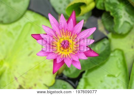 the seed-bearing part of a plant, consisting of reproductive organs (stamens and carpels) that are typically surrounded by a brightly colored corolla (petals) and a green calyx (sepals)