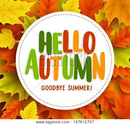 Hello autumn text greetings vector banner design with white circle for text in fall seasonal maple leaves background. Vector illustration.