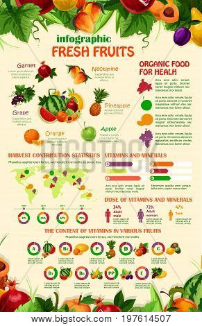 Fruits infographics template. Vector design elements of fruit consumption, grape or apple vitamins statistics, diagram and chart on organic food on world map for melon or apricot and plum or pineapple