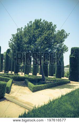 Tall Trees In The Jardines, Royal Garden Of The Alcazar De Los Reyes Cristianos, Cordoba, Spain, Eur