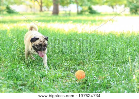 Cute dog playing with rubber ball in park