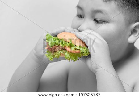 pork hamburger on obese fat boy hand Black and white background unhealthy food junk food or fast food