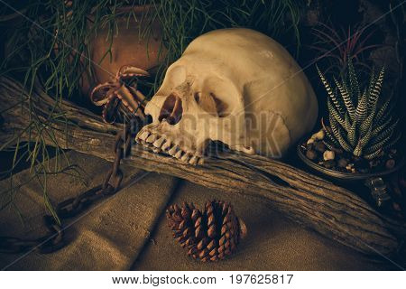 Still life with a human skull with desert plants cactus timber and chain.