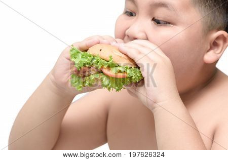 pork hamburger on obese fat boy hand background isolated on white unhealthy food junk food or fast food