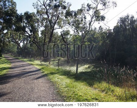 Gravel path along a rural creek through bush and wetland in misty morning sun Victoria Australia 2017