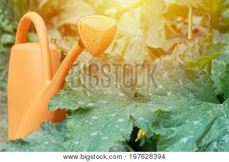 Orange Watering Can In Garden For Watering Beds And Plants, Sunlight