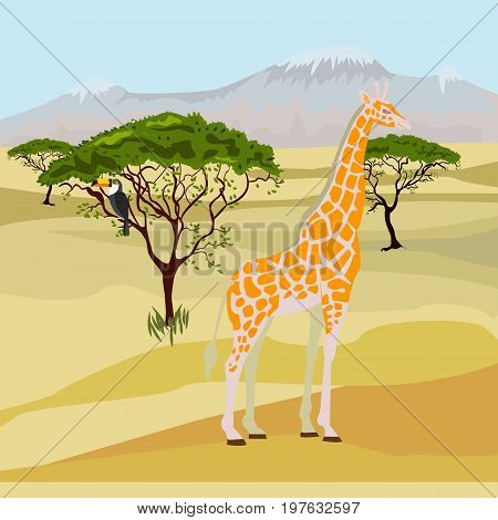 African savanna - day landscape. Vector illustration. Giraffe in the African Savannah on background of acacia trees and mountains.