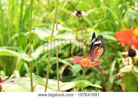 Image of butterfly on flower in graden