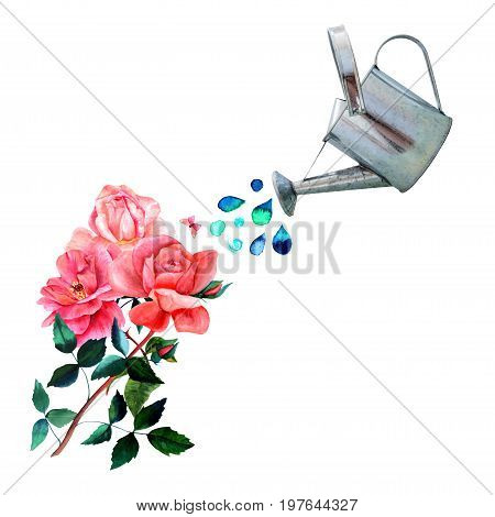 A collage of watercolor drawings and a photo cutout. A watering can pouring water over vintage style red roses with many green leaves, with a little pink butterfly, and a place for text, on white
