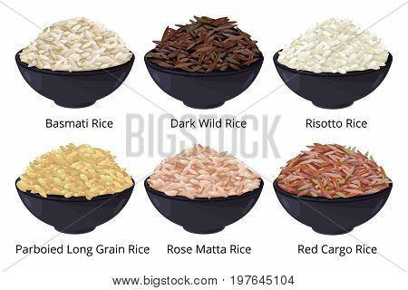 Different type of rice. Long grain, brown, white and other. Vector illustrations in cartoon style. Unpolished raw rice seed