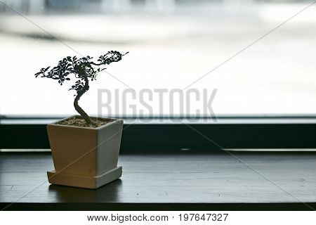 A Small Tree In A Pot By The Window
