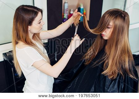 Young beautician trimming or cutting split damaged ends of client s long hair in beauty parlor.