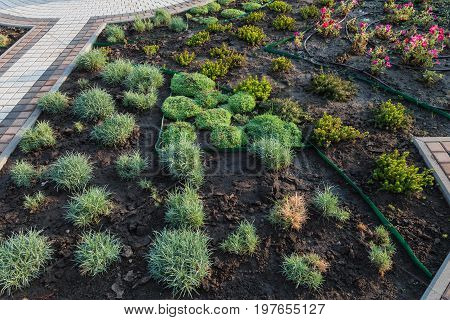 Yard with a fountain and fresh planted plants, drip irrigation, stone paths, wooden fence