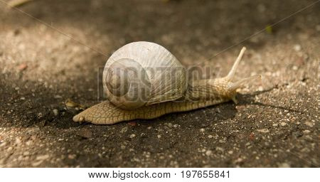 I met this snail in the woods