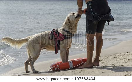 View of rescue dog coming out of the water