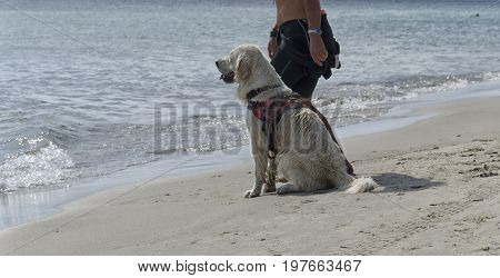 View of rescue dog waiting his turn