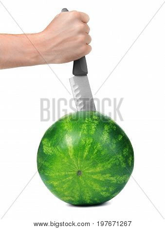 Male hand cuts a fresh and perfect round striped watermelon with a  sharp knife, isolated on the white background. A knife is stabbed into the juicy and firm watermelon.