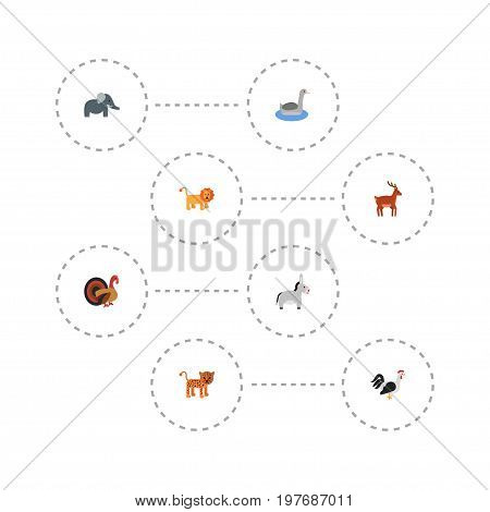 Flat Icons Trunked Animal, Jackass, Waterbird And Other Vector Elements