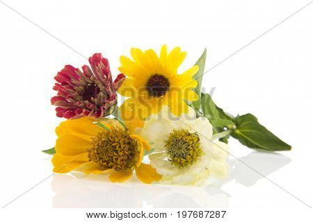 Bouquet Zinnia's isolated over white background
