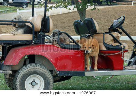 Golf Cart Full Of Dogs