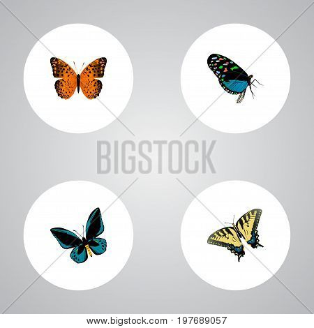 Realistic Checkerspot, Danaus Plexippus, Hairstreak And Other Vector Elements