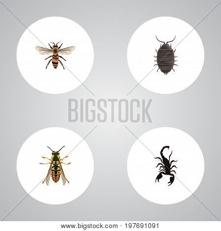 Realistic Wasp, Poisonous, Bee And Other Vector Elements