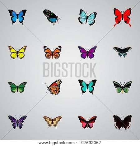 Realistic Milkweed, Morpho Hecuba, Polyommatus Icarus And Other Vector Elements