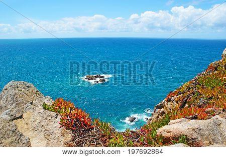The Succulents On Cabo Da Roca