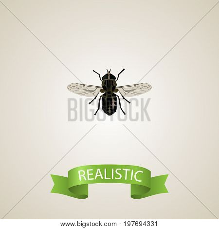 Realistic Fly Element. Vector Illustration Of Realistic Midge Isolated On Clean Background