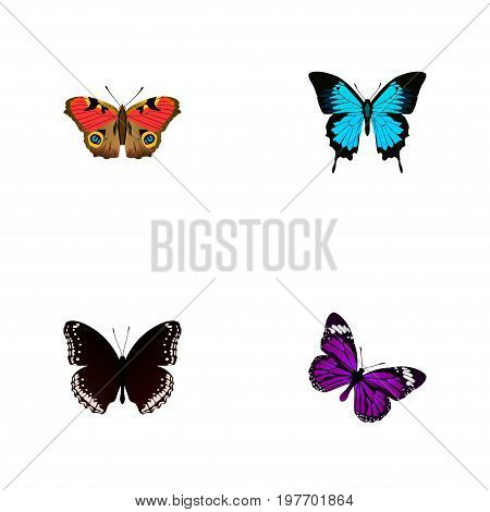 Realistic Papilio Ulysses, Spicebush, American Painted Lady And Other Vector Elements