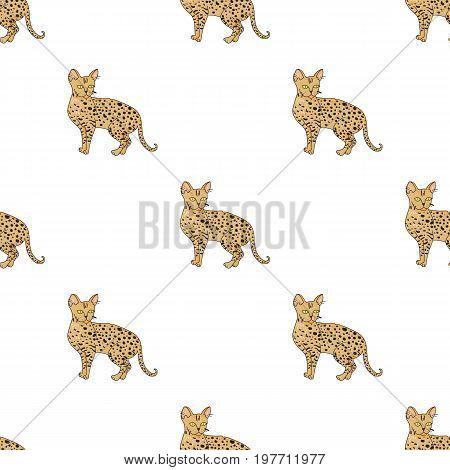Savannah icon in cartoon design isolated on white background. Cat breeds symbol stock vector illustration.