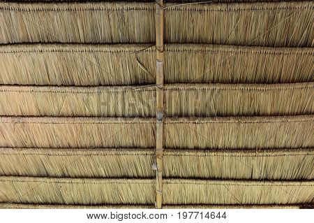 thatch roof or dry grass use for background