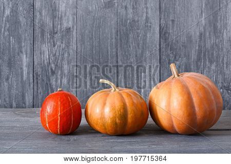 Autumn harvest background. Side view, pumpkins on weathered rustic blue wood with copy space.