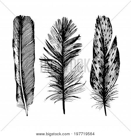 Vector bird feather from wing isolated. Vector feather for background, texture, wrapper pattern, frame or border.
