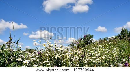 landscape with a Flower meadow in Summer
